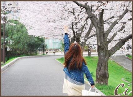 桜のコピー