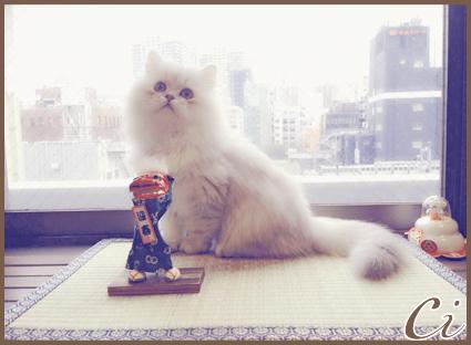 猫画像のコピー