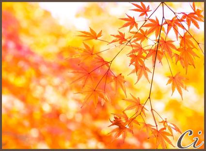 秋画像のコピー